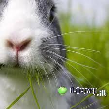 Опасные и не опасные заболевания кроликов: признаки недугов, как лечить, профилактика и вакцинация
