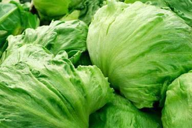 7 видов салата для вашего сада