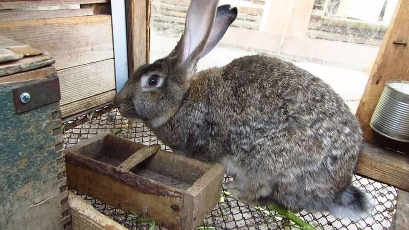 Как правильно убивать кроликов