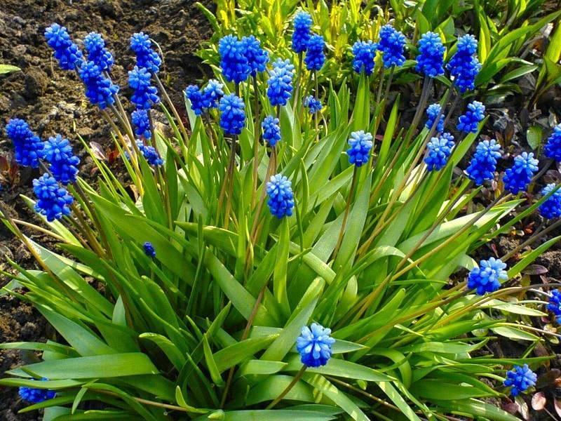 Зимостойкие многолетние цветы. многолетние цветы для сибири: фото и названия