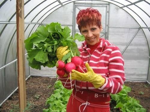 Можно ли выращивать капусту вместе с помидорами в теплице