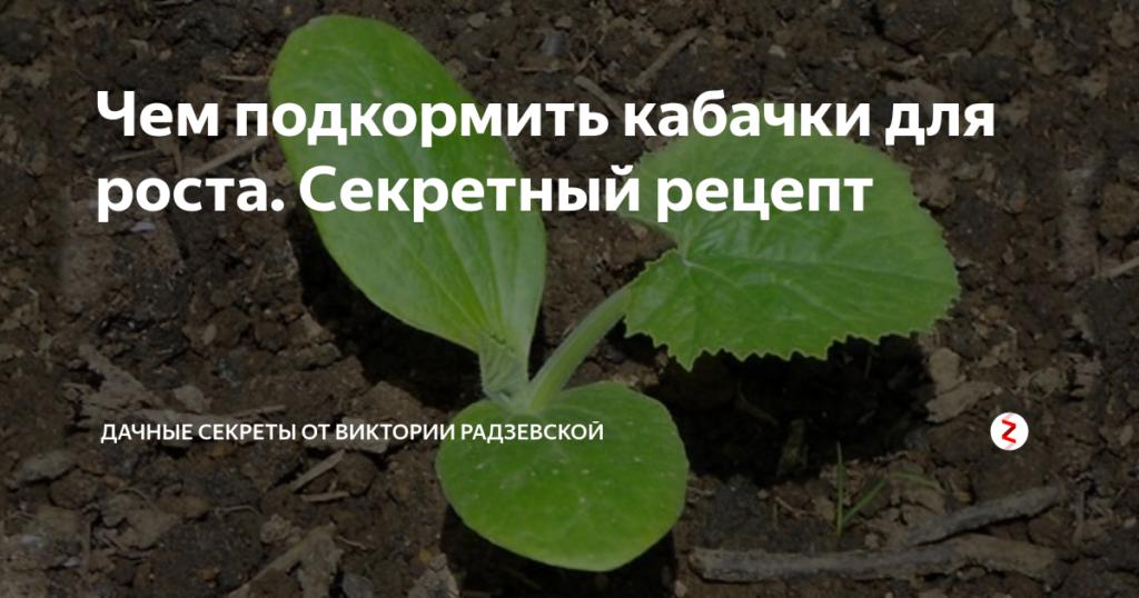 Чем подкормить кабачки во время цветения и плодоношения