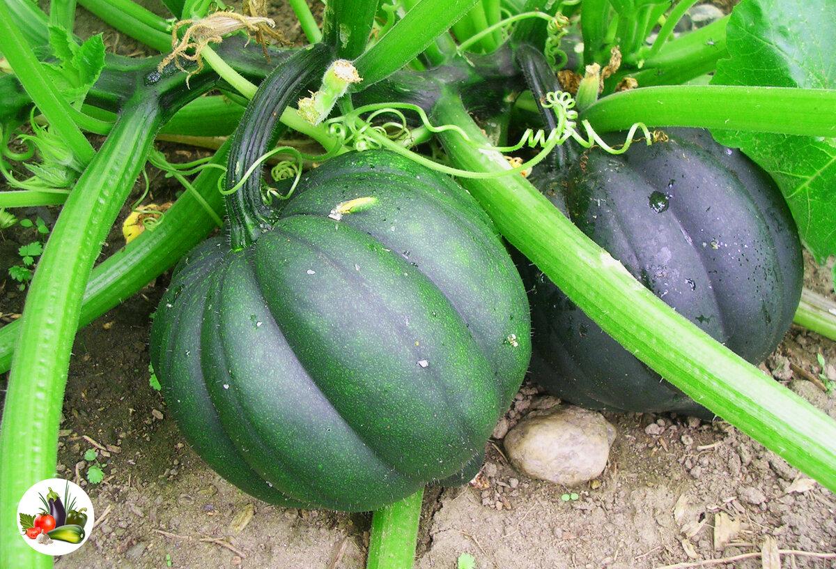 Как делать и использовать компост — органические удобрения для сада