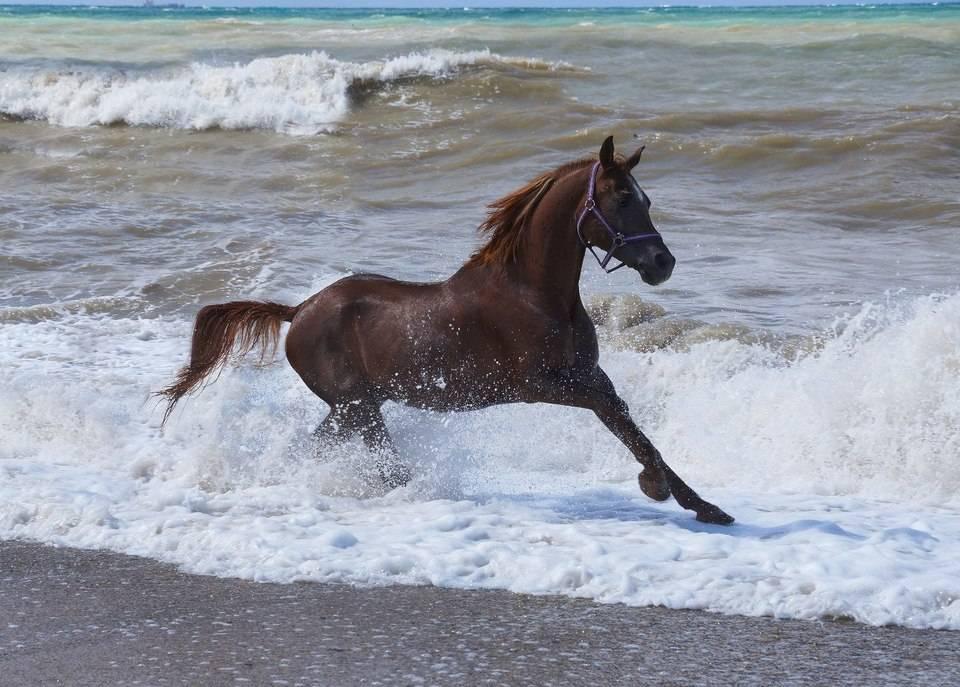 Как используется молоко лошади?