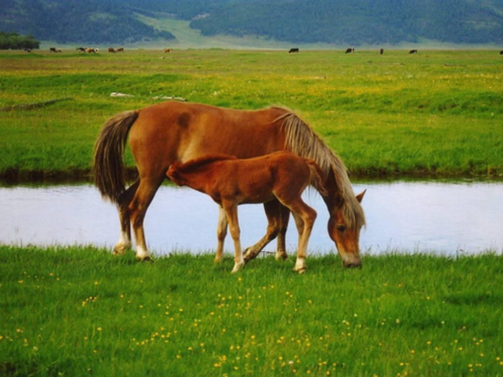 Сонник мешать молоко лошади. к чему снится мешать молоко лошади видеть во сне - сонник дома солнца. страница 2