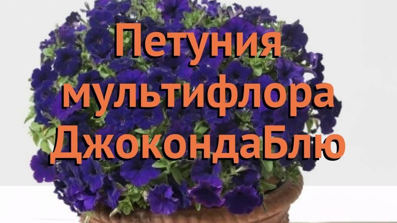 Петуния каскадная (43 фото): лучшие сорта с названиями «дабл каскад f1 блю» и «рамблин f1 бургунди хром», гигантская «тайфун f1 ред велюр» и «орхид мист», микс и крупноцветковая «синий водопад f1»