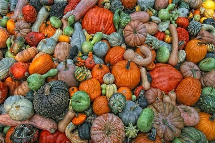 Выращивание кабачков и тыкв по лунному календарю в 2020 году