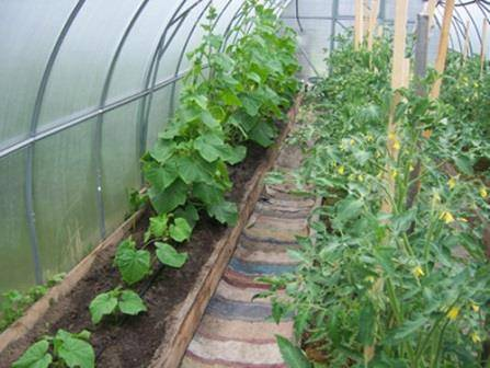 Выращивание помидоров в теплице из поликарбоната: посадка и уход