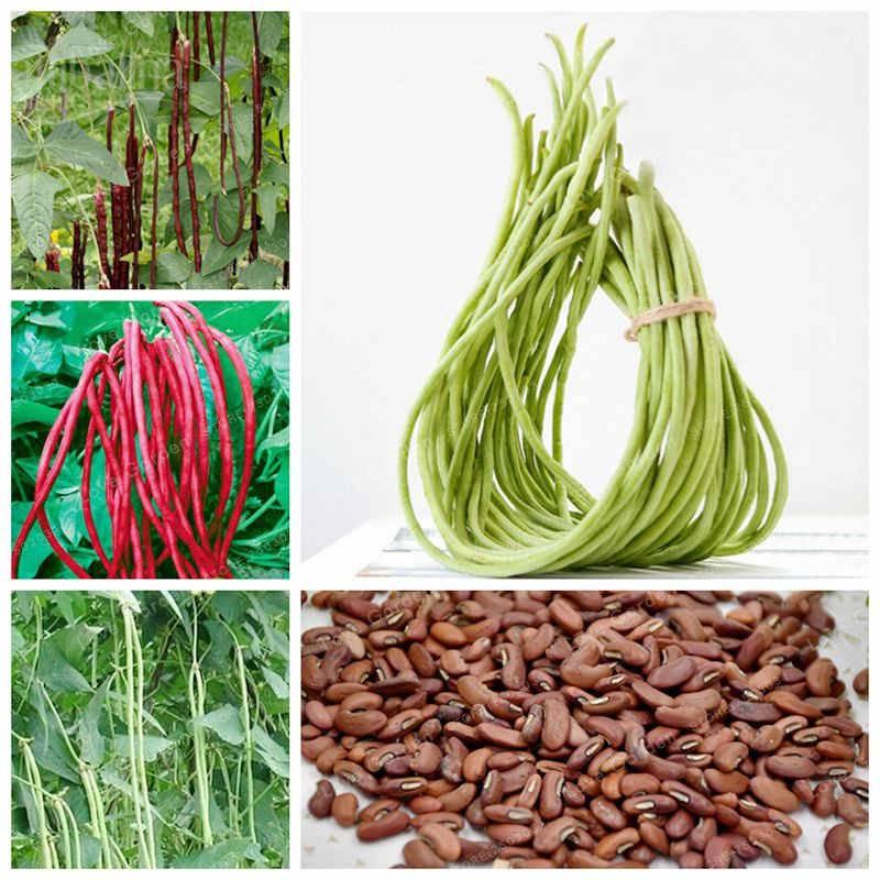 Вигна: выращивание, сорта