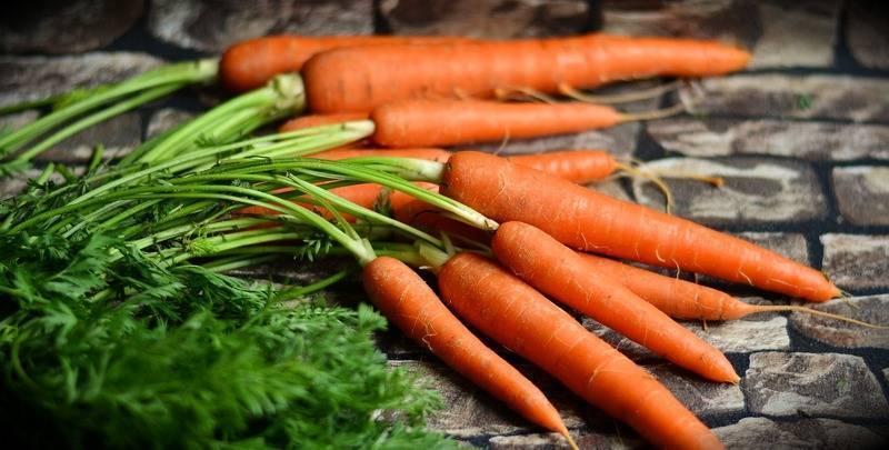 Правила посадки моркови в сибири