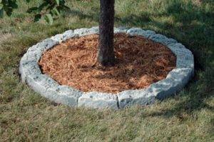 Оформление приствольных кругов деревьев (фото)