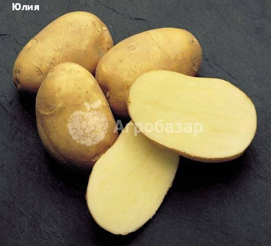Сорт картофеля «фелокс»: характеристика, описание, урожайность, отзывы и фото