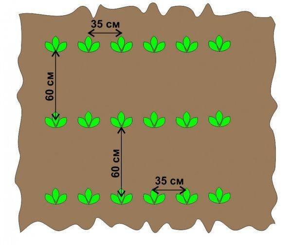 Посадка и уход за картофелем с помощью мотоблока: как сажать картошку? технология обработки и уборки, выбираем картофелевыкапыватель для копки