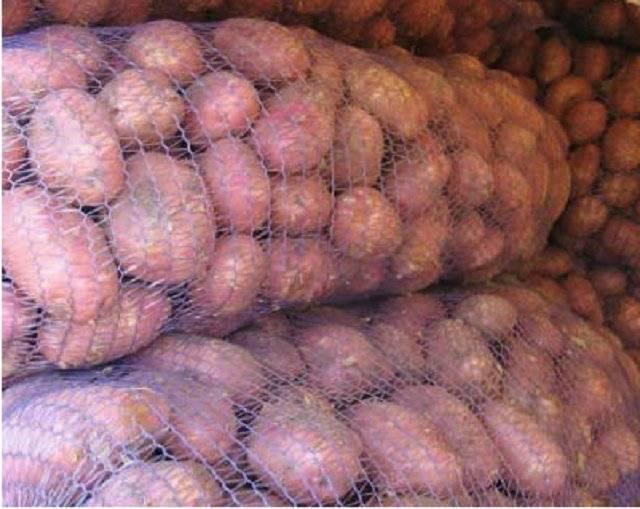 Картофель ред скарлет: описание сорта, выращивание и уход