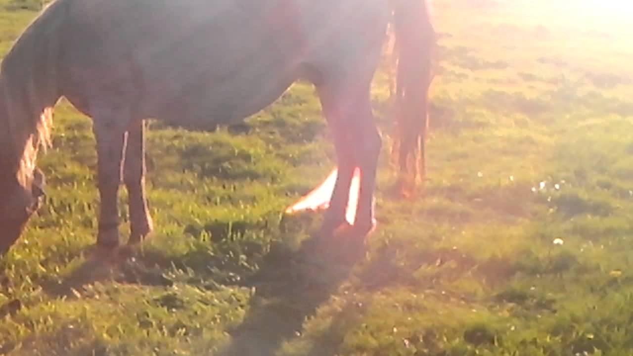 Все о беременности и родах у лошадей