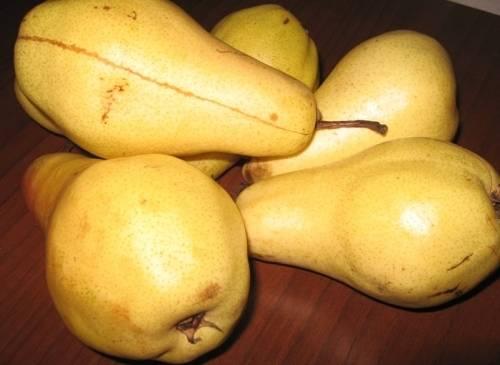 Лучшие сорта груш для подмосковья с фото и описанием: выбор садоводов