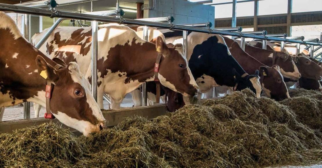 Как запустить корову перед отёлом зимой (удой 4-20 л!)
