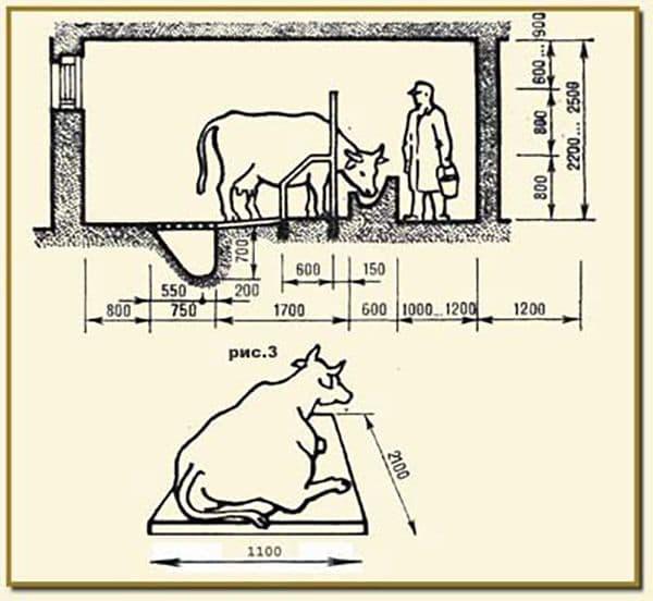 Сарай для коровы своими руками: особенности строительства и оборудования
