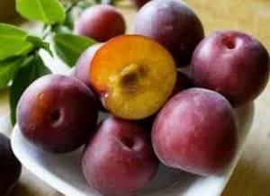 Абрикос графиня – фруктовое величество с ароматом лета