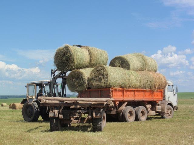 Сколько корове нужно сена в сутки