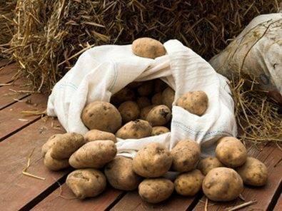 Чтобы не пропал урожай «второго хлеба» — советы по созданию оптимальной температуры для хранения картофеля