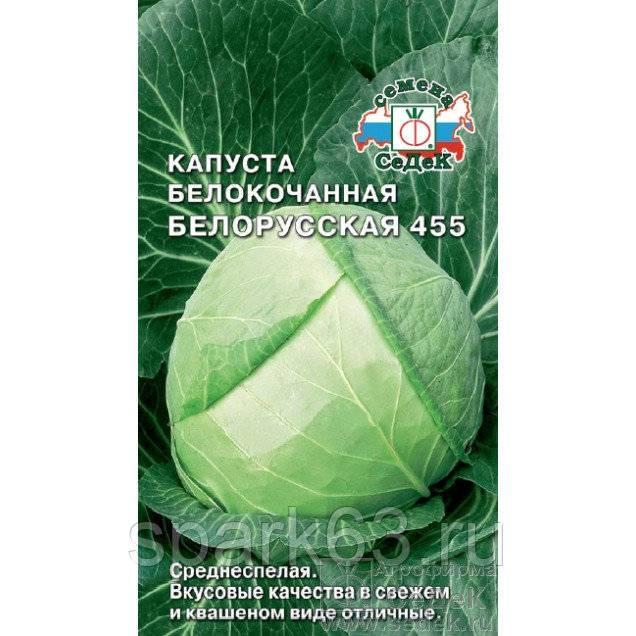 Капуста белорусская 455: характеристика и описание среднепозднего сорта с фото