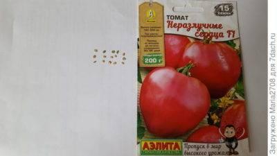 А вы знаете, когда сажать томаты на рассаду? учимся определять верный срок посадки для разных сортов