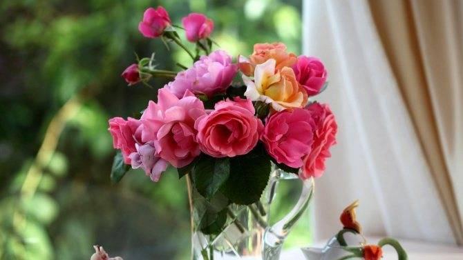 Как надолго сохранить розы в вазе?