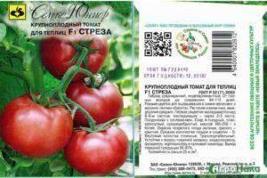 Сорт (гибрид) томата «чемпион f1»: описание, характеристика, посев на рассаду, подкормка, урожайность, фото, видео и самые распространенные болезни томатов