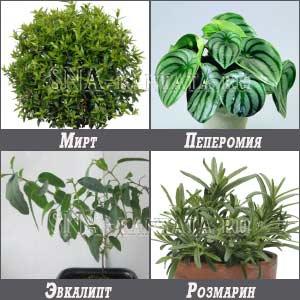 Какие комнатные растения можно поставить в детской комнате