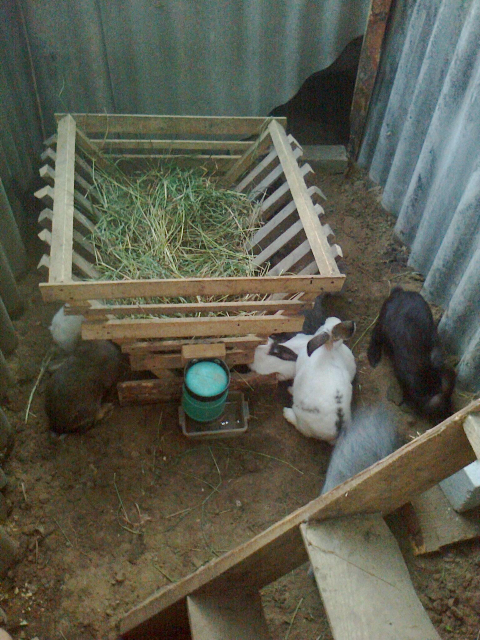 Разведение и содержание кроликов в яме в домашних условиях с фото