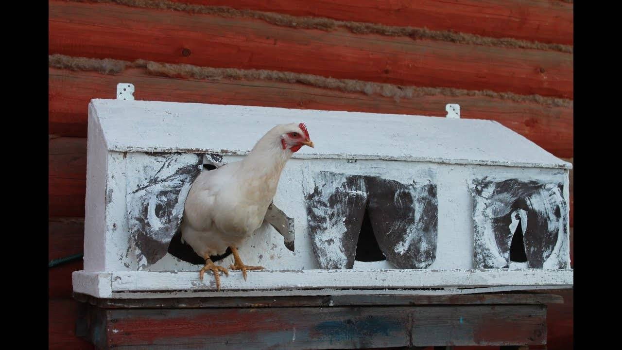 Гнезда для кур несушек своими руками, размеры, гнезда с яйцесборником