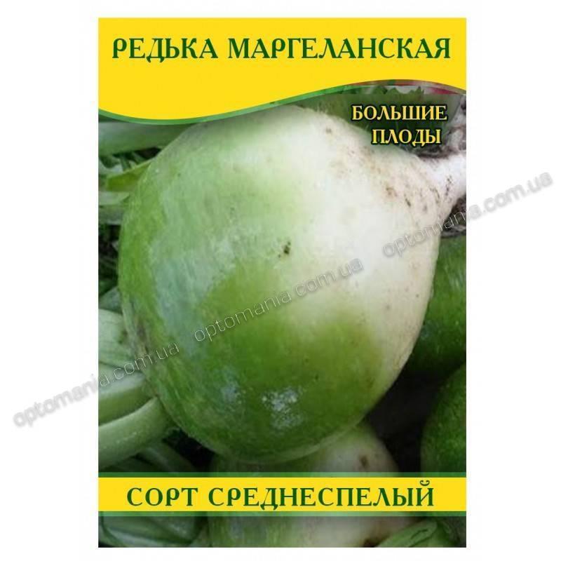 Редька маргеланская польза и вред. зеленая (маргеланская) редька: полезные свойства и противопоказания