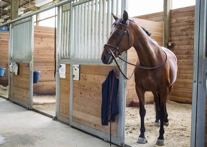 Конюшня для лошадей: что учесть и как построить своими руками
