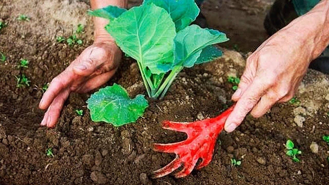 Как бороться и чем обработать капусту и клубнику от крестоцветной блошки