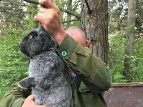 Как колоть кроликов. как забить кролика? отбор кроликов и методы убоя