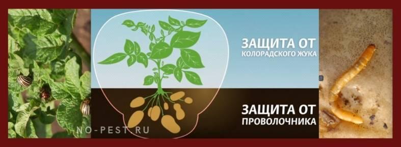Табу от колорадского жука: инструкция по применению, описание средства