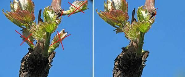 Как разбудить яблоню после тяжелой зимы – весенняя побудка