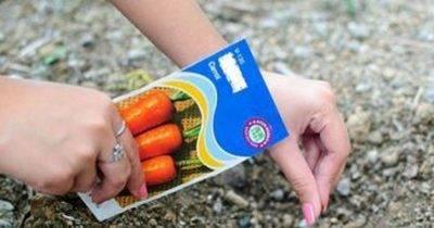 Посадка моркови лентой