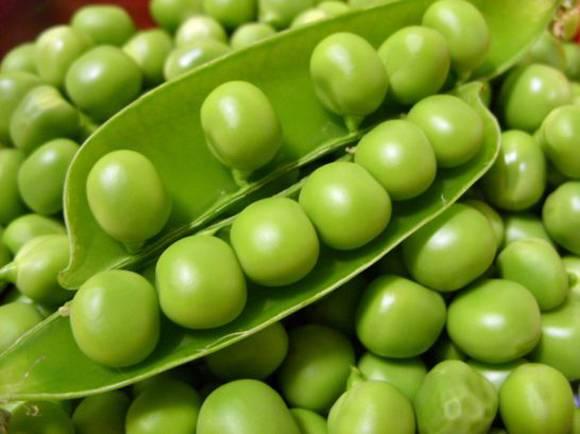 Культурные растения и их классификация