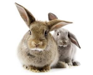 Понос у кроликов: основные причины, лечение и профилактика