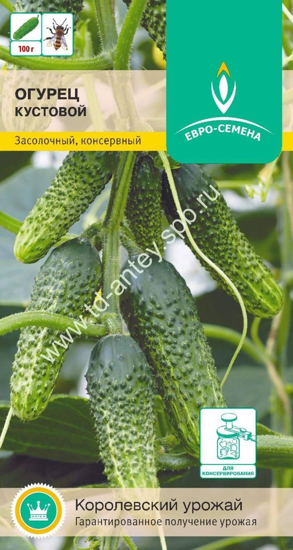 Огурец кустовой – 7 особенностей и 11 советов по выращиванию