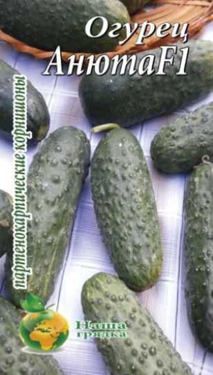 Партенокарпический сорт огурцов, что это такое - какие особенности нужно знать при выращивании?