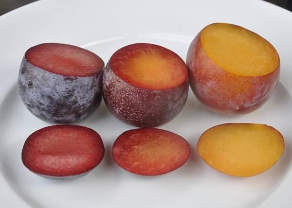 О выращивании гибридов: абрисливы, шарафуги, смеси яблока и сливы