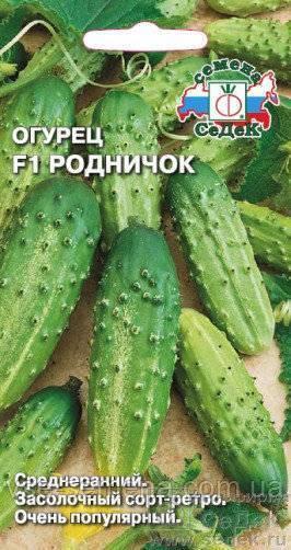 Огурец кустовой: описание и характеристика, отзывы