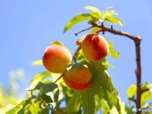 Абхазия летом, осенью, зимой, весной - сезоны и погода в абхазии по месяцам, климат, tемпература