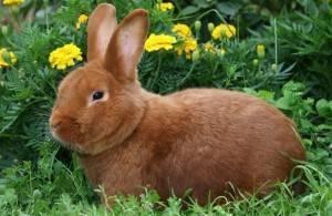 Кормление кроликов в домашних условиях: что можно давать и в каких количествах