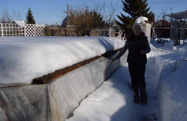 Все о сроках раскрытия озимого чеснока: когда снимать зимнее укрытие с грядки