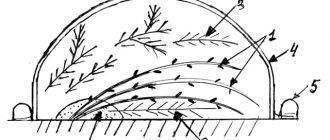 Подготовка к зиме гортензии растущей в открытом грунте