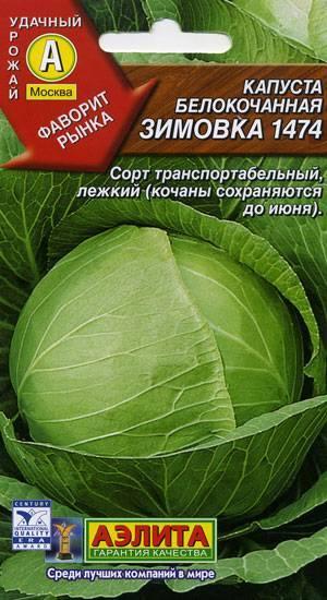 Капуста зимовка: описание и отличия от других видов, плюсы и минусы этого овоща, а также похожие сорта и цели использования